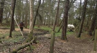 ponies in the woods