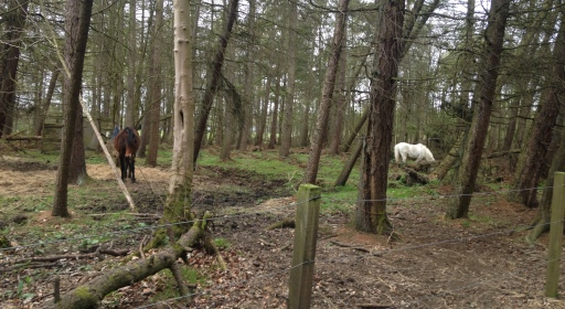ponies in the woods