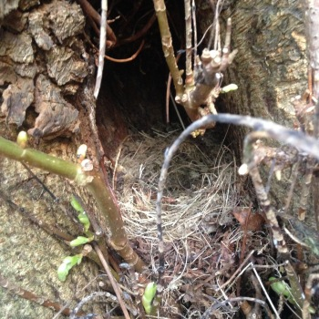 a well hidden nest